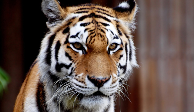 """Have you lost """"the eye of the tiger"""" when it comes to youth ministry?"""